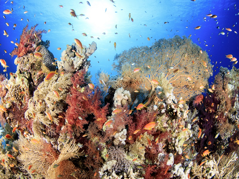 紅海 画像3