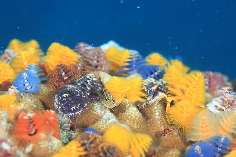 タオ島の海の特徴1-5