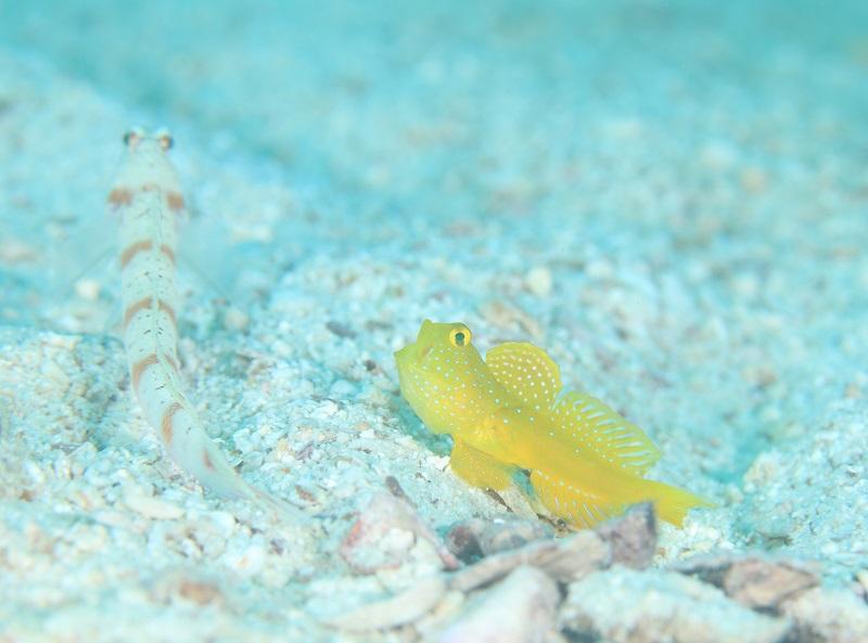タオ島の海の特徴1-6
