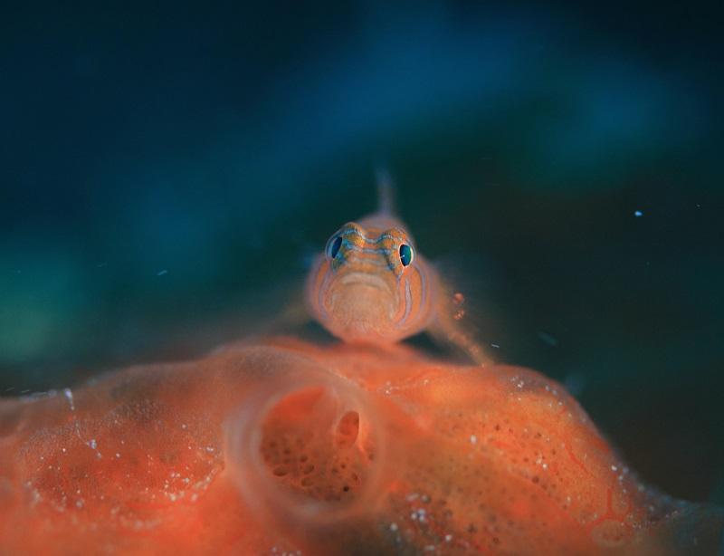 タオ島の海の特徴1-2