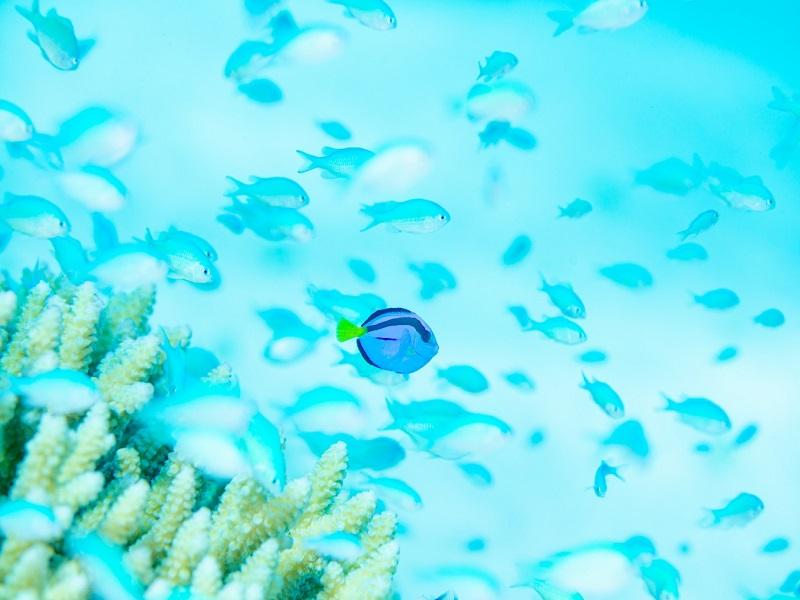 阿嘉島 画像2