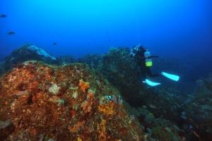 ドルフィンスイム&圧倒的な大型回遊魚1-1