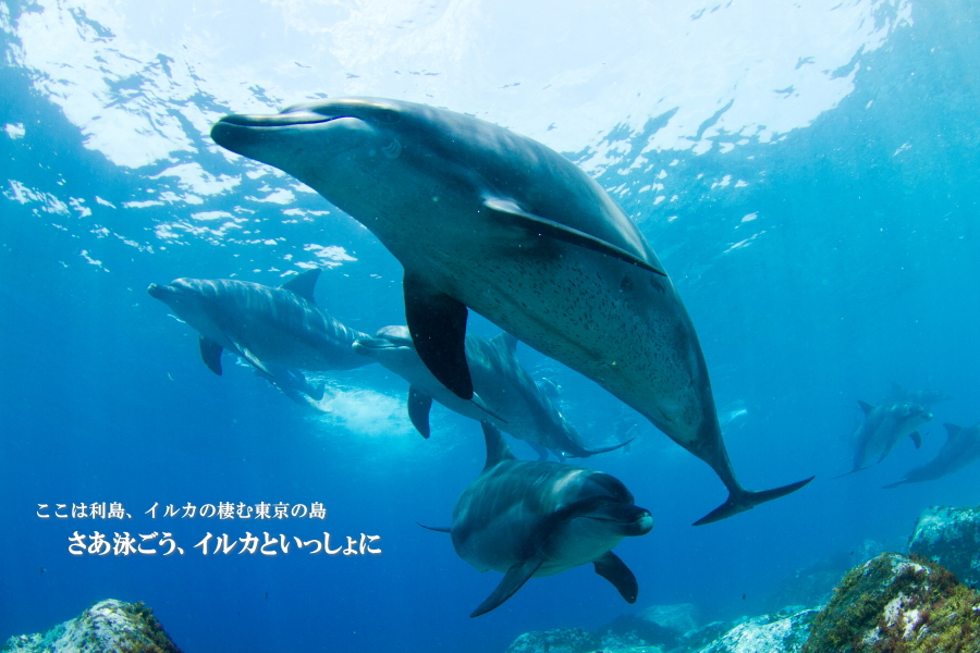 利島ダイビングサービス1-1