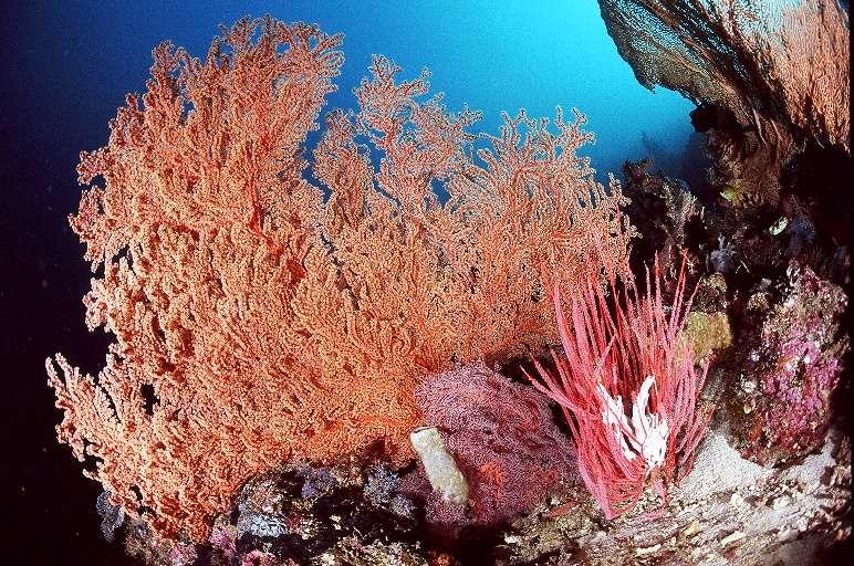 ◆コモド諸島について◆4-1