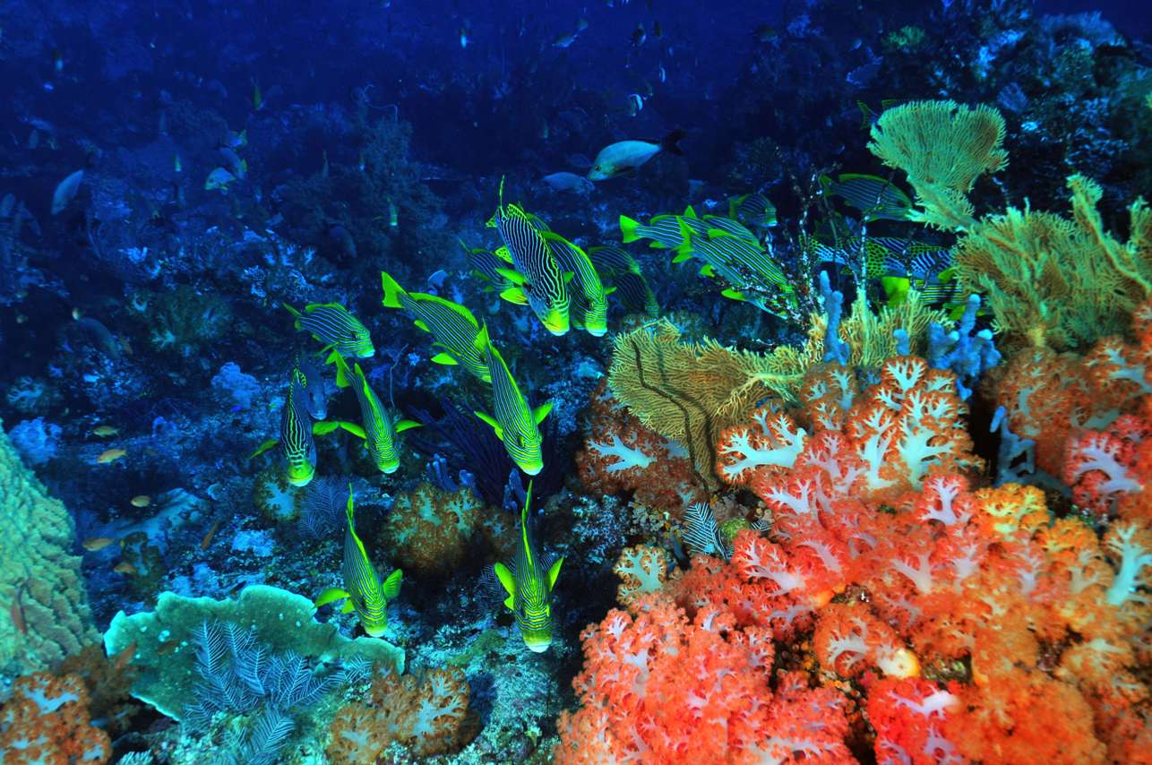 ◆コモド諸島について◆4-3