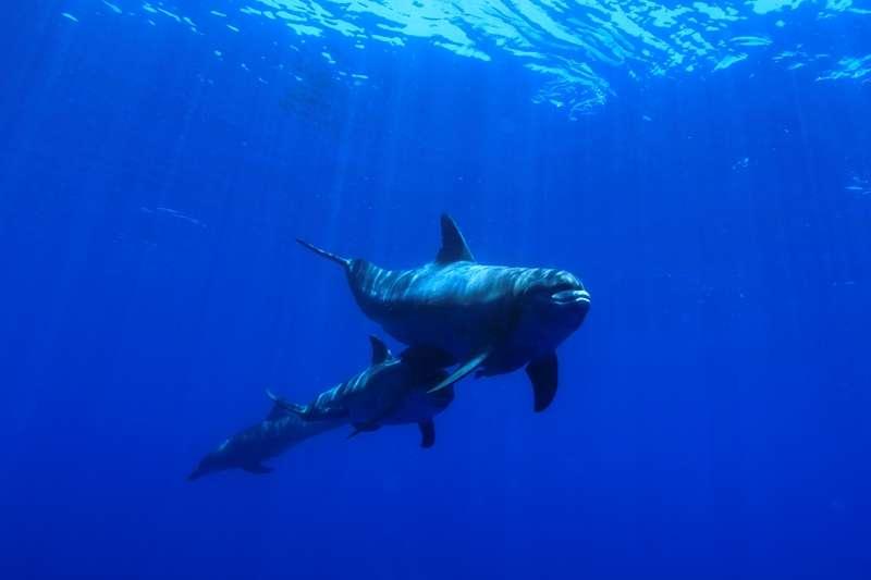 クジラのベストシーズン到来!!3-1