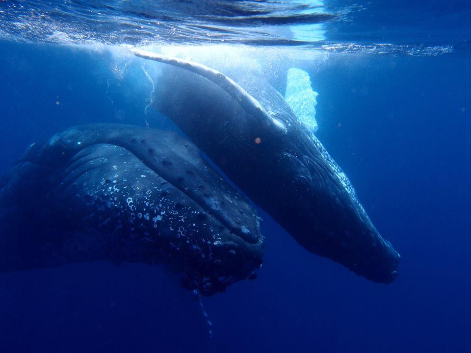 クジラのベストシーズン到来!!3-3