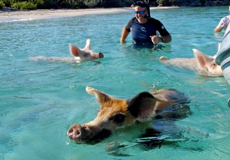 【バハマ】カリブの楽園 豚と泳ごう?!カリブダンサー写真