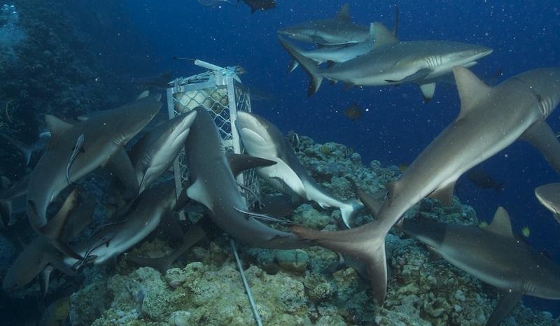 【オーストラリア】世界遺産の海を潜る!スピリットオブフリーダム号写真
