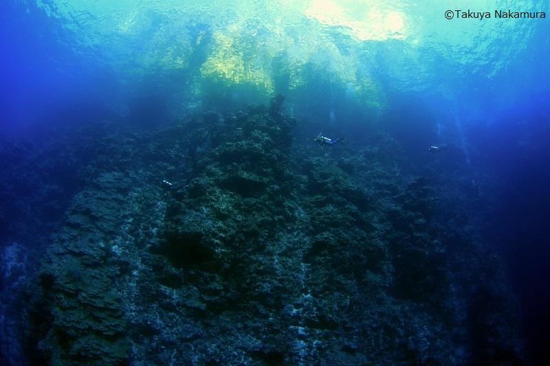 【ソロモン諸島】魚群にサンゴ、レック!野生の海!ソロモン諸島!2