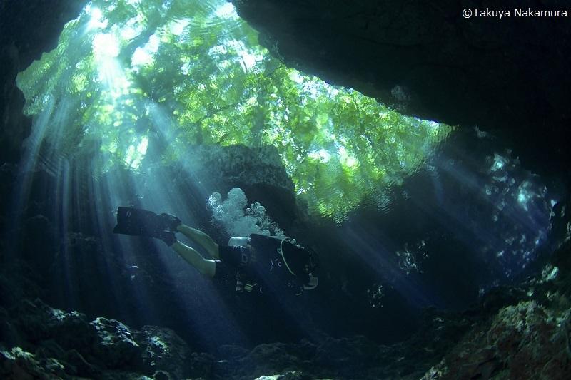 【ソロモン諸島】魚群にサンゴ、レック!野生の海!ソロモン諸島!写真