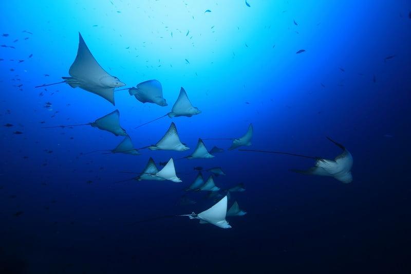 【モルディブ】 期間限定のスペシャル航海!バァ環礁でマンタ三昧クルーズ!!1