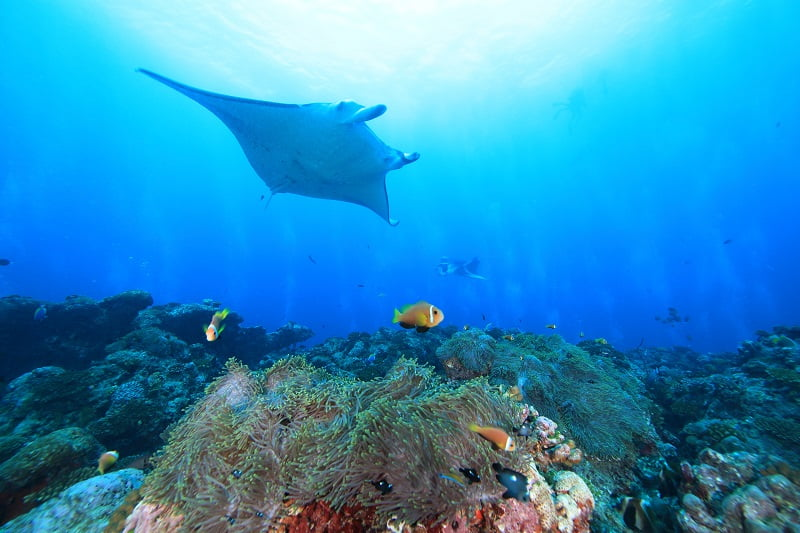 【モルディブ】 期間限定のスペシャル航海!バァ環礁でマンタ三昧クルーズ!!5
