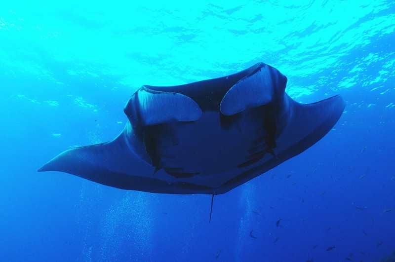 【ソコロ諸島】世界中のダイバーが注目!!!絶海の孤島ツアー復活1