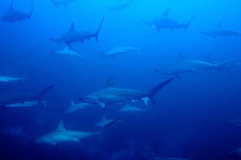 【ソコロ諸島】世界中のダイバーが注目!!!絶海の孤島ツアー復活2
