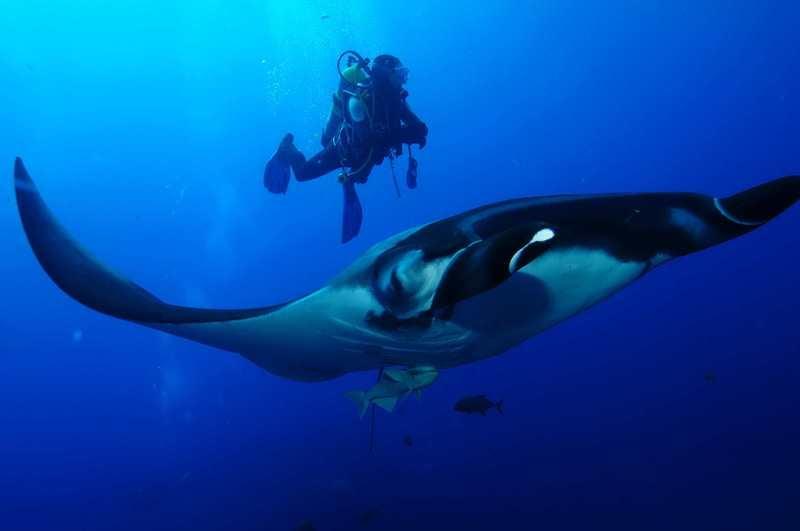 【ソコロ諸島】世界中のダイバーが注目!!!絶海の孤島ツアー復活4