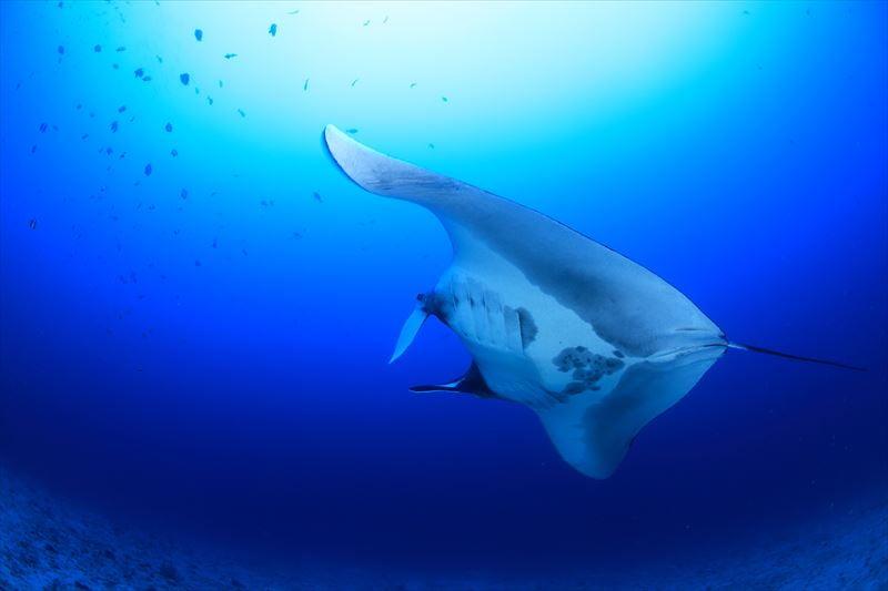 【インドネシア】★多種類の生物が生息する奇跡の海★ラジャアンパットクルーズ4