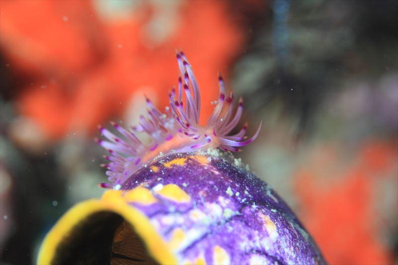 【インドネシア】★多種類の生物が生息する奇跡の海★ラジャアンパットクルーズ5