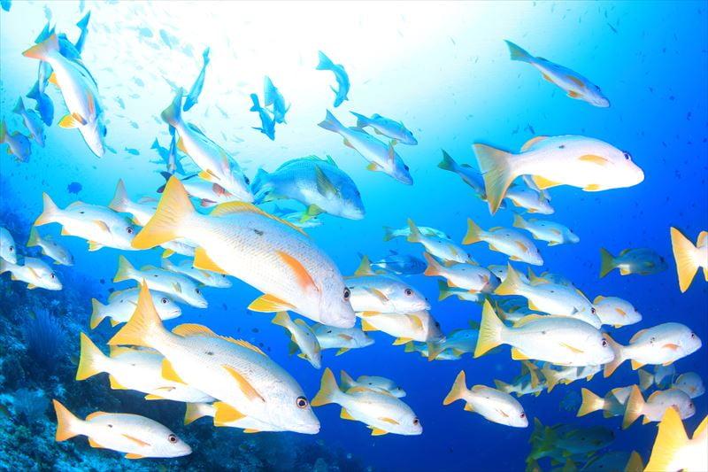 【インドネシア】★多種類の生物が生息する奇跡の海★ラジャアンパットクルーズ1