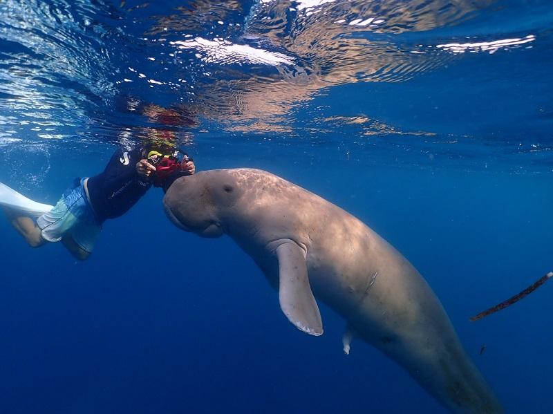 【インドネシア】ジュゴンと泳げる海≪アロール≫&マッコウクジラを狙え≪レンバタ島≫1