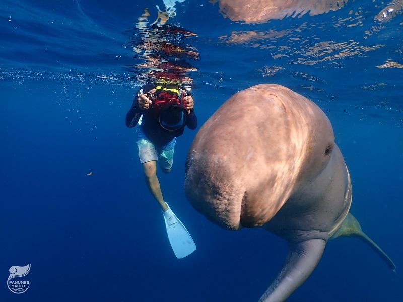 【インドネシア】ジュゴンと泳げる海≪アロール≫&マッコウクジラを狙え≪レンバタ島≫4