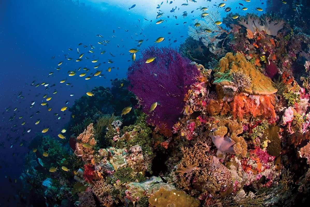 Teluk Maya3-1
