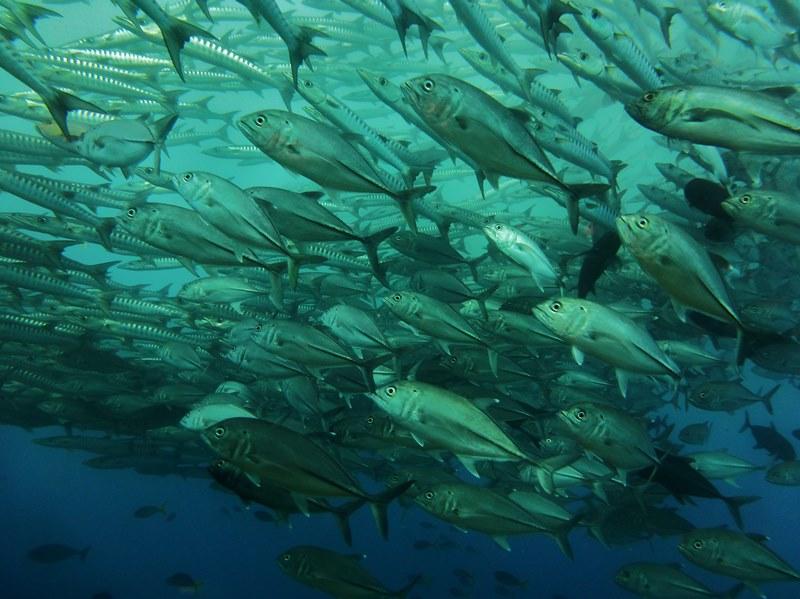 魚影に圧巻されるマダンの海1-2