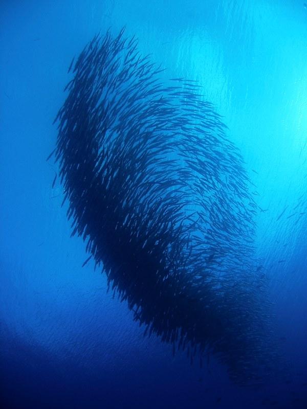 Big Fish Country(ビッグ・フィッシュ・カントリー)1-1