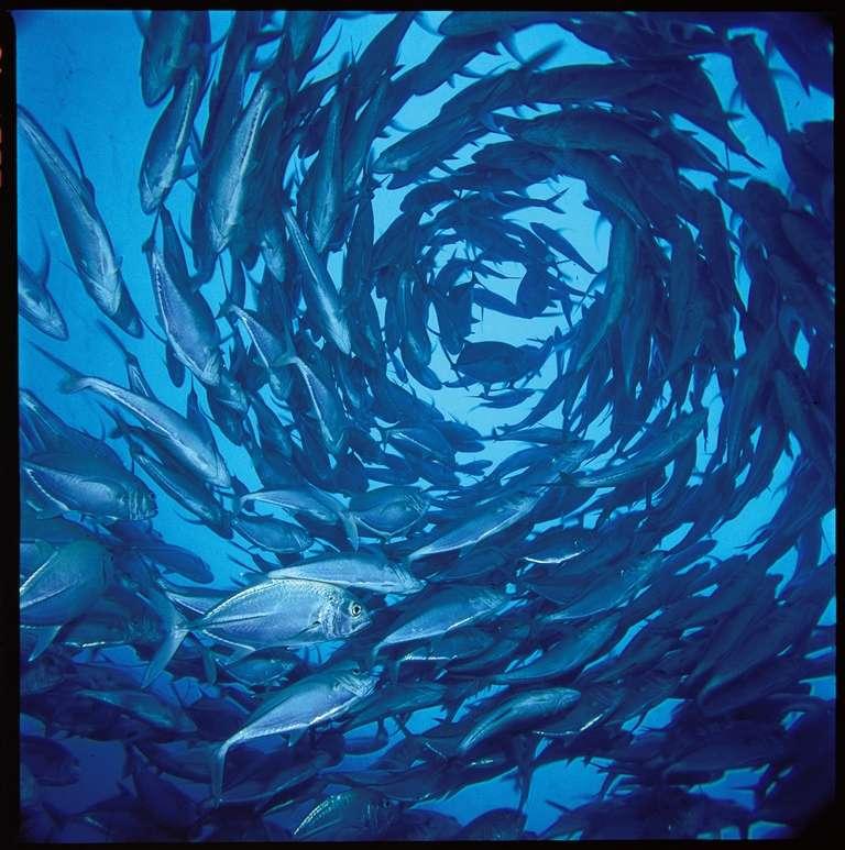 パラオの海1-1
