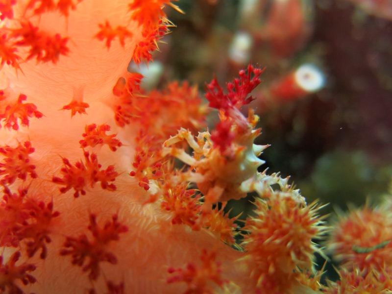 世界で最もサンゴの種類&数の多い地域1-2