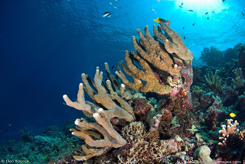 自然の豊かさを感じる海!1-1