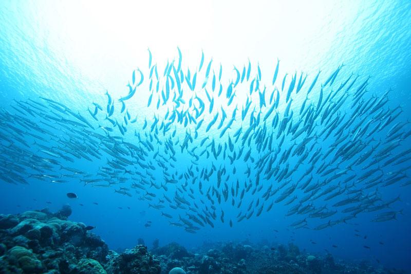 ディップパッセージ(アンツ環礁) *ボートで70分4-1