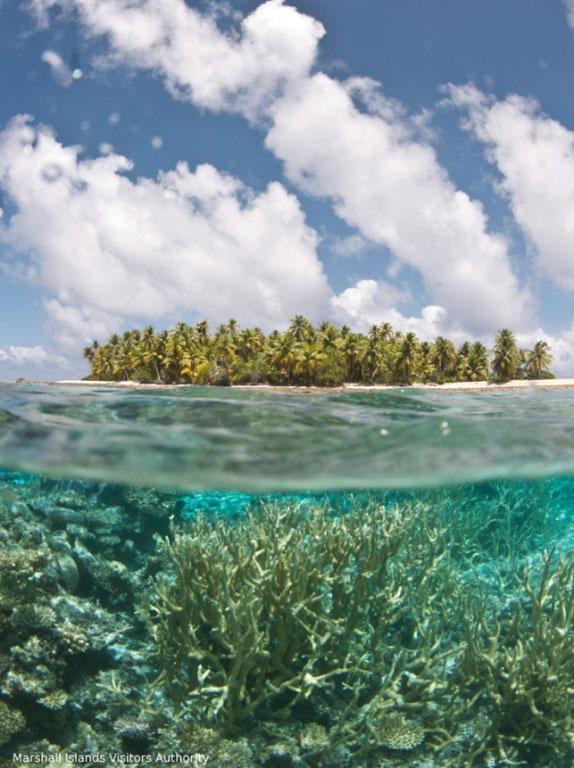 サンゴの原生林1-1