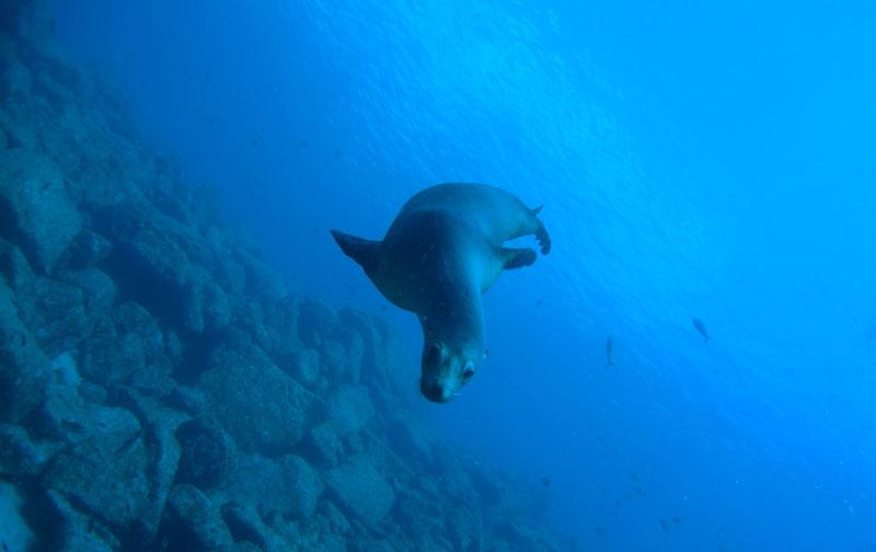 ラパスの海の特長は2-1
