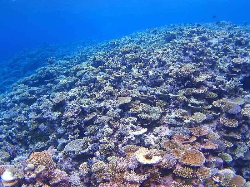 キミシマ環礁12-1