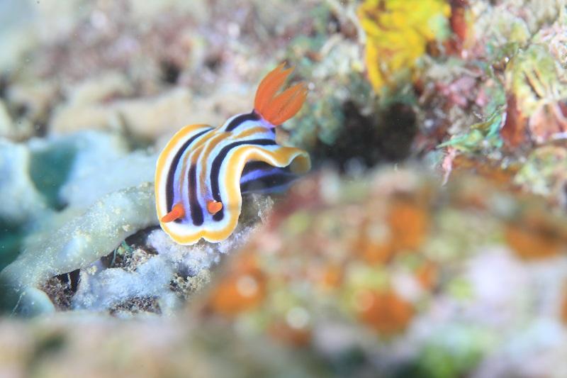 Secret Reef. シークレット リーフ7-1