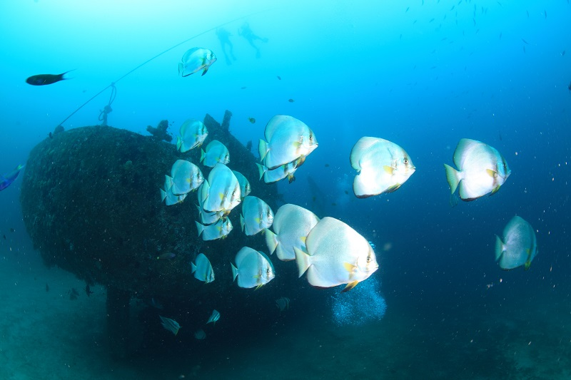 Sabang wrecks. サバン レック6-1