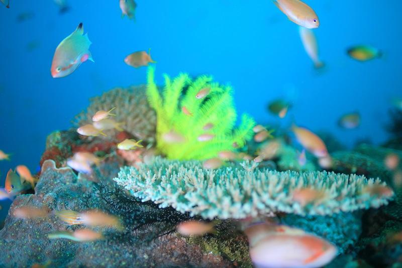 Fantasea Reef. ファンタシー リーフ2-1