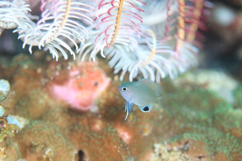Fantasea Reef. ファンタシー リーフ2-3