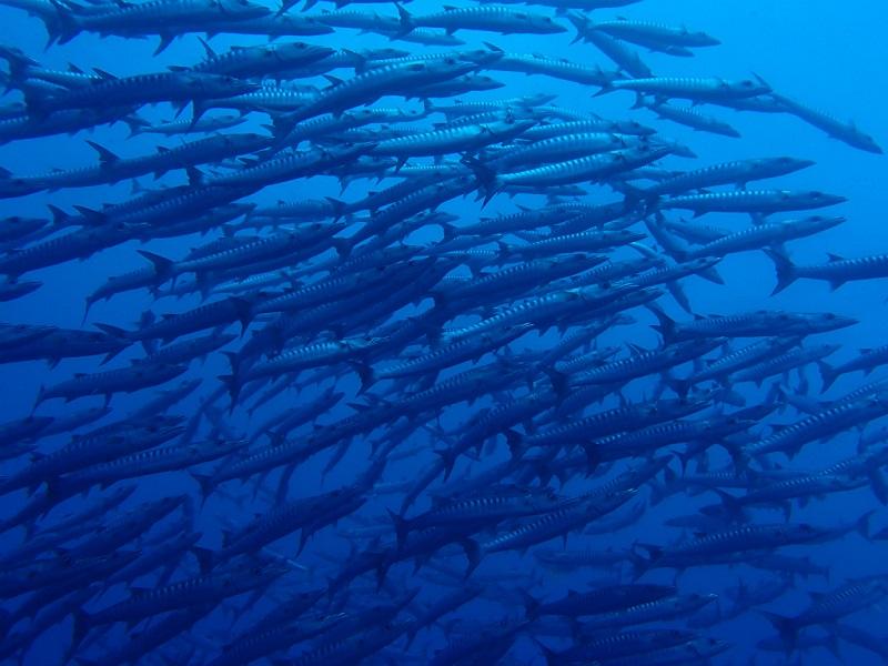 ユースケポイント(パキン環礁) *ボートで80分5-1