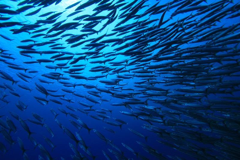 ユースケポイント(パキン環礁) *ボートで80分5-2