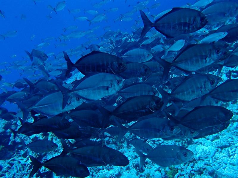 ユースケポイント(パキン環礁) *ボートで80分5-3