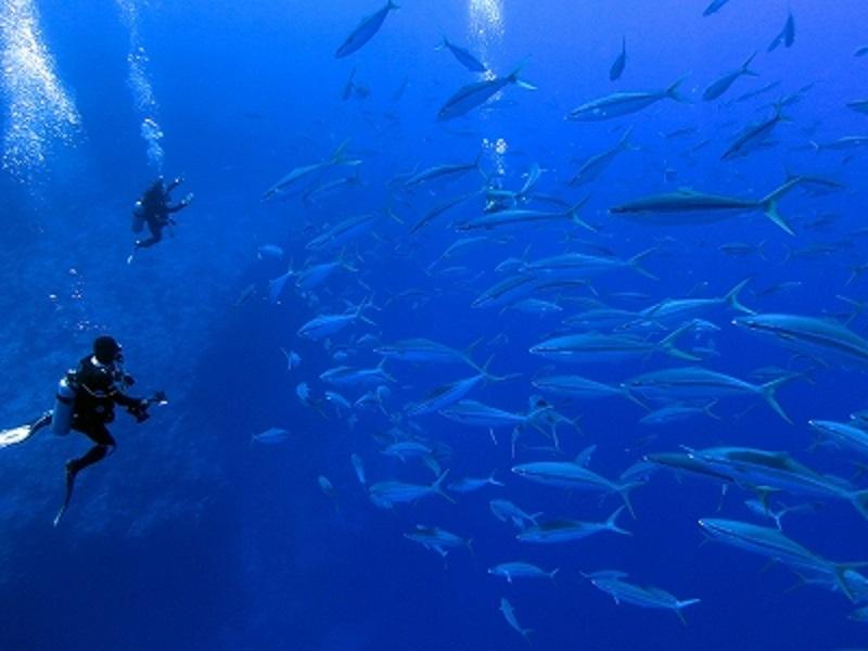 キミシマ環礁12-2