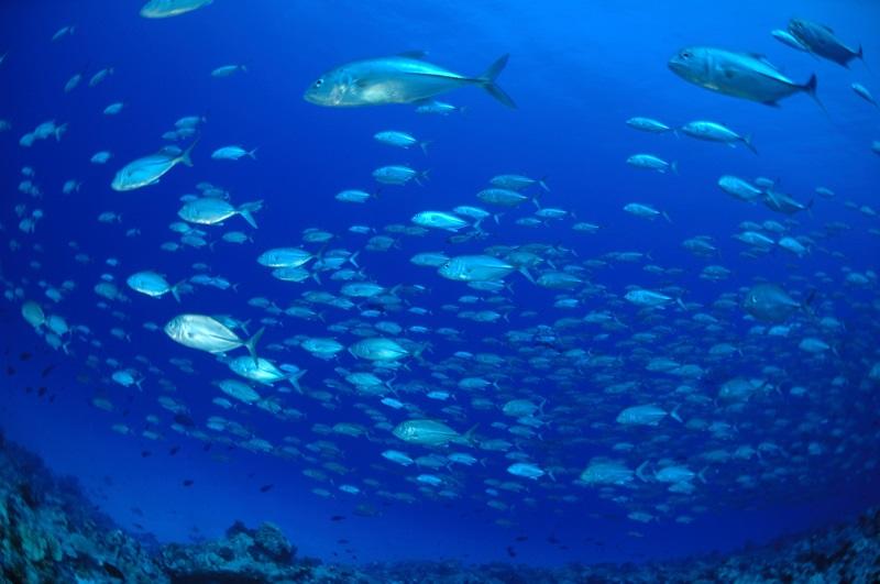 アクアリュームアウトサイド(Aquarium outside) *ボートで40~45分2-2