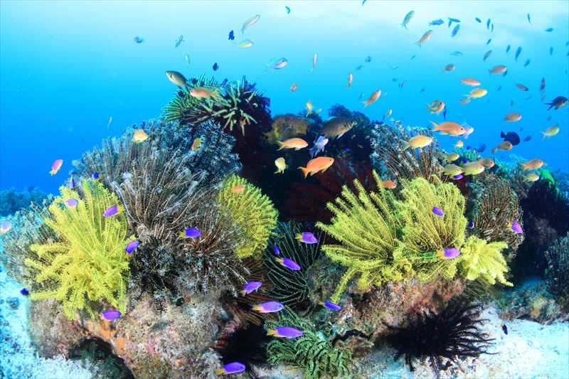 バリカサグ島のダイビングポイント ※ノバビーチクラブからボートで約30分1-2