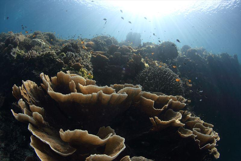 バリカサグ島のダイビングポイント ※ノバビーチクラブからボートで約30分1-4