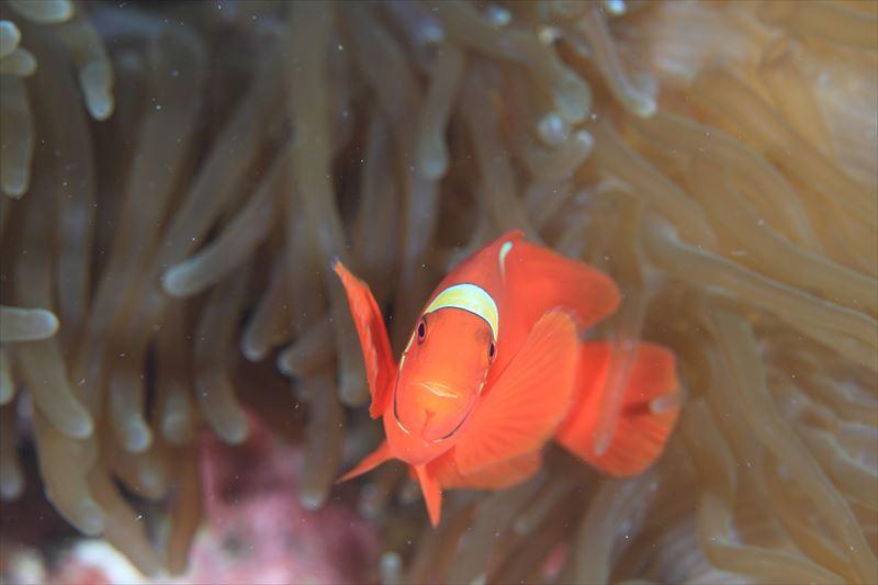 バリカサグ島のダイビングポイント ※ノバビーチクラブからボートで約30分1-5