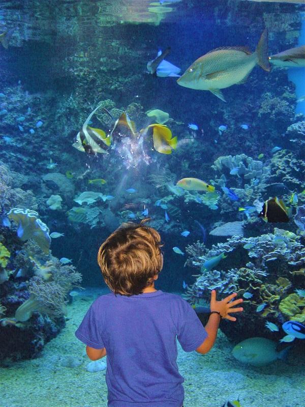 aquarium lagon(水族館)1-1