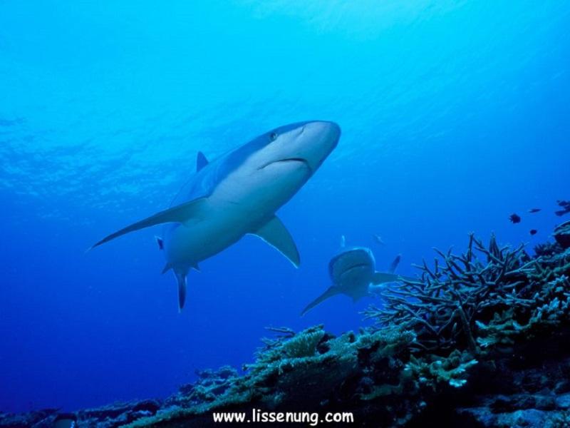 人気水中カメラマン古見きゅうさんと行く パプアニューギニア!写真