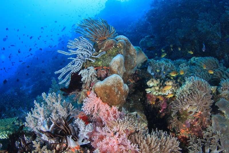 的場も絶賛パプアニューギニア・トゥフィ1